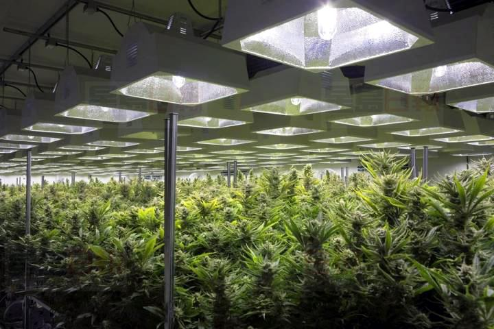 魁省大麻生产商Hexo宣布裁员200人,相等于整体员工人数的约四分一。加通社